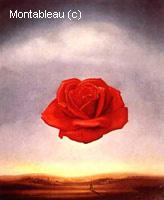 Meditative Rose