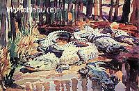 Alligators dans la Boue